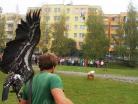 Říjen 2014 – ukázka dravců pro žáky 1. – 9. ročníku