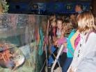 Říjen 2014 – exkurze žáků 6. a 7. tříd v Mořském světě a ZOO Praha
